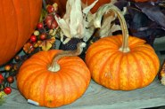 Pumpkin-Decor-2