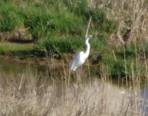 Nature Along Apple Creek