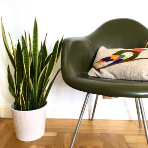 IKEA planter with snake plant and green Eames chair with a pillow by Ilano Design, which has an image of a bird on it.
