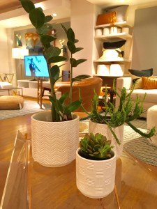 CB2 trio of white matte planters, as shown on top of a table in the store. There are plants in them.