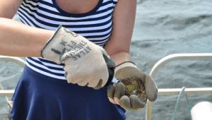 Oyster Farming Blog 5