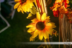 Sunflowers at Fall Flavours Event