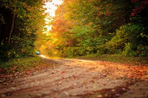 Driving through a red dirt road in Fall by Stephen Desroches