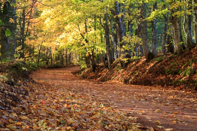 Changing colors of a PEI back dirt road by Stephen Desroches
