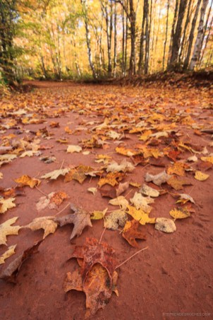 Leaves along a dirt road by Stephen Desroches
