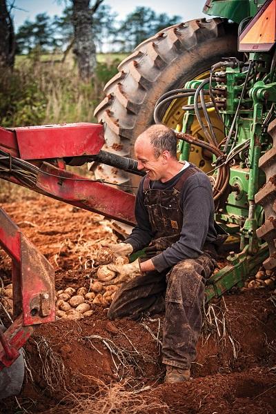 Andrew Lawless Harvesting Potatoes