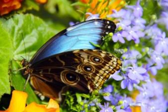 Prince Edward Island Preserve Company - Butterfly House