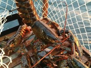 PEI Lobster Trap