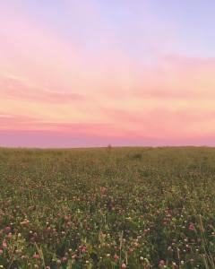 Beautiful Field in PEI
