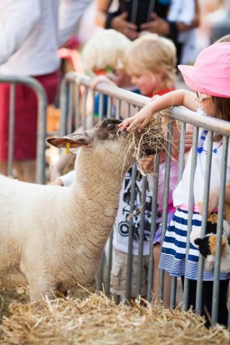 Photo via Farm Day in the City