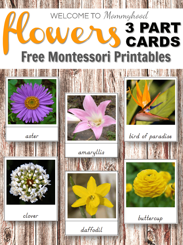 use these montessori flowers 3 part cards to create fun