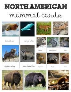 North american mammals cards