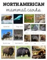 Montessori North American Mammals cards