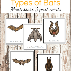 Montessori Types of Bats Printables 3 Part Cards