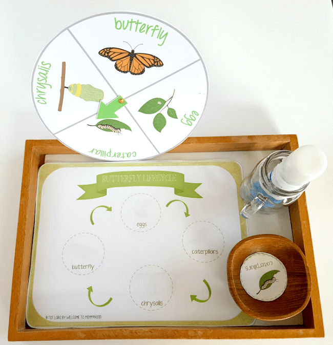 Your students will love learning about butterflies with our beuatiful hands-on Butterfly Life Cycle Printables and Activities! You can use these to create butterfly science centers, hands-on learning activities, or Montessori butterfly activities. Your students will love learning about butterflies with our beuatiful hands-on Butterfly Life Cycle Printables and Activities! You can use these to create butterfly science centers, hands-on learning activities, or Montessori butterfly activities.