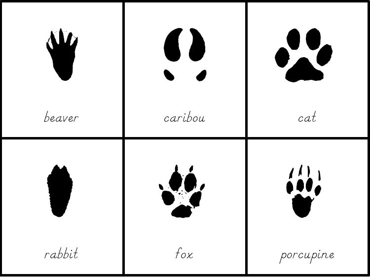 Montessori Animals and Their Tracks 3 part cards