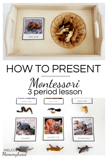 Montessori 3 period lesson #montessori, #montessoriactivities