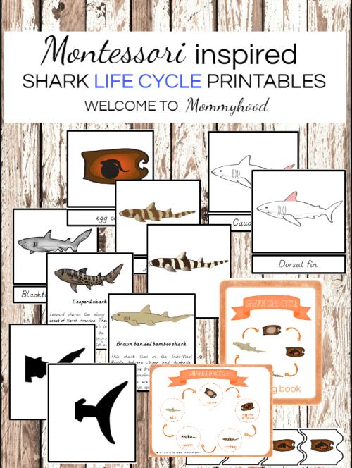 Montessori shark printables