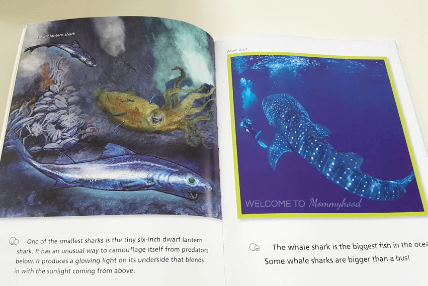 Books for kids: sharks! Read more about this amazing read along book perfect for young children on the blog! #montessori #kidsbooks