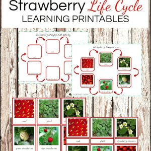 Montessori activities: Strawberries life cycle #montessori #montessoriactivities