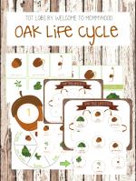 Oak Tree Life Cycle Printables