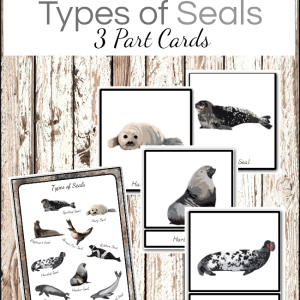 Types of Seals Montessori Ocean Themed 3 Part Cards and Poster Welcome to Mommyhood