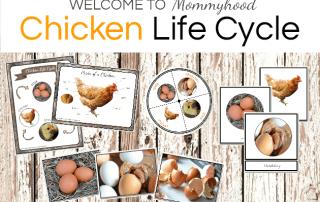 Montessori Chicken Life Cycle Printables
