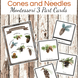 Montessori 3 Part Cards: Types of Cones and Needles