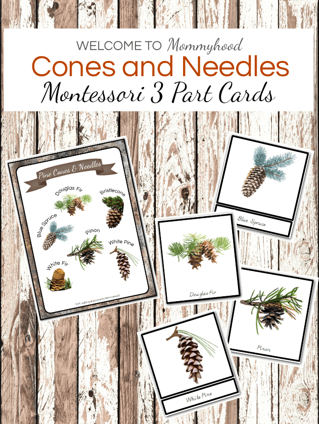 Fall 3 Part Cards: Cones and Needles Montessori 3 Part Cards