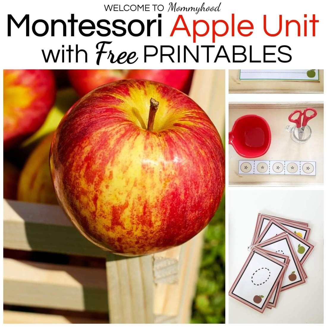 Montessori Apple Unit