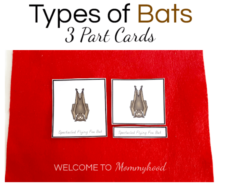 Montessori Halloween Activities Types of Bats Printables 3 Part Cards. Learn how to use this material and get your own copy here! #montessorirpintables #montessoriactiviteis
