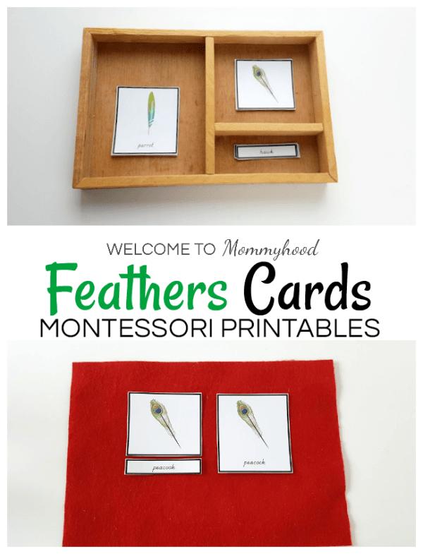 Montessori feathers 3 part cards - birds activities for kids #montessoriprintables #kidsactivities #montessoriactivities