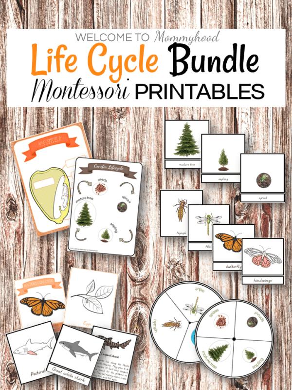 Montessori Life Cycle Printables Bundle