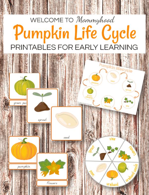 Montessori Inspired Pumpkin life cycle printables #thanksgivingprintables #thanksgivingactivities