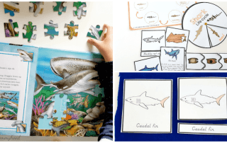 Shark Learning Activities