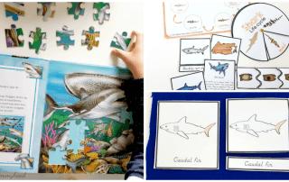 Shark Learning Activities