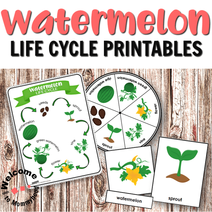 Watermelon Life Cycle Printables for Hands-on Activities