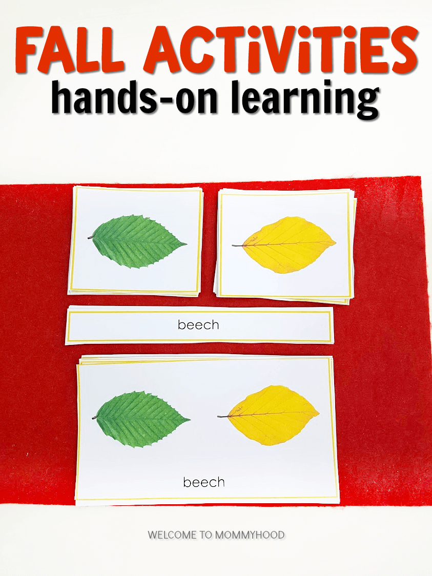 Your students will love exploring these Fall Activities for Kindergarten! These are beautiful materials perfect for a Montessori classroom!