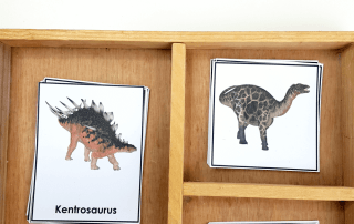 Use these dinosaur theme Montessori 3 part cards to introduce dinosaurs to your students. They will be fascinated with the realistic images.
