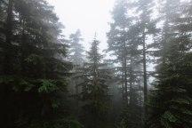 Hurricane Ridge, Washington