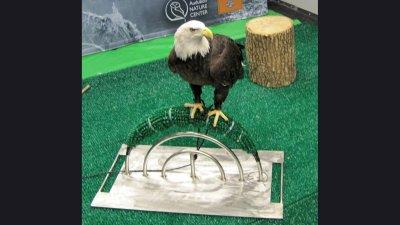 odd-hd-eagleperch