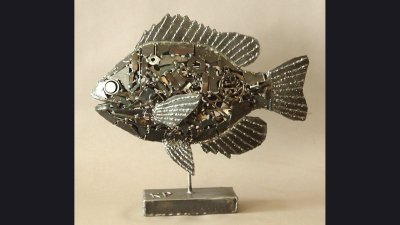 Panfish - 22 in wide for DNR