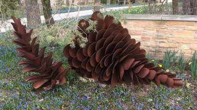 Pinecone 6 fPinecone 6 ft wide 2016t wide