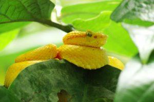 Regenwoud Costa Rica Cahuita