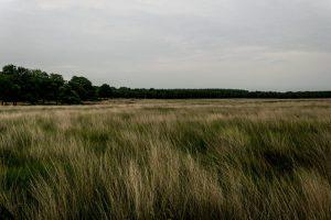 Uitgestrekte grasvlaktes op de Hoge Veluwe
