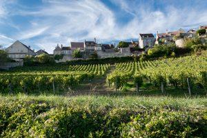 wijnvelden langs oude wegen en pelgrimssteden.