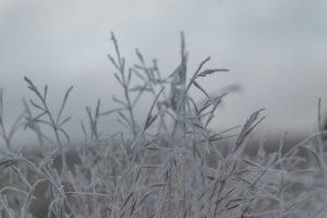 Vier seizoenen in Spanje met bevroren planten