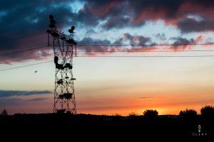 stork birds in electricity poles