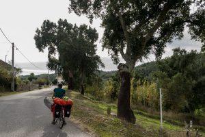 fietser langs kurkeik in Portugal
