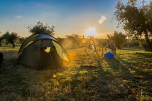 camping in between the olive trees
